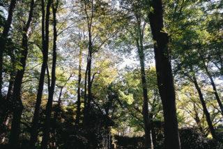 有栖川宮記念公園(131116)#02