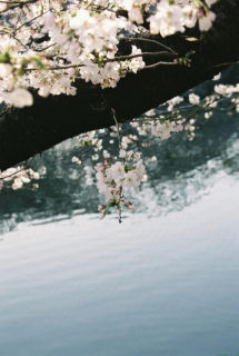 千鳥ヶ淵(13/03/23) ⑤