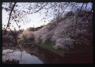 千鳥ヶ淵(13/03/23) ⑧