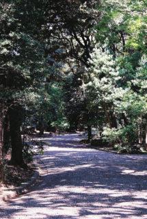 旧古河庭園 4