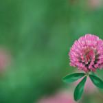 神代植物公園 #09