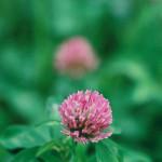 神代植物公園 #15