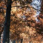 舎人公園(131207)#06