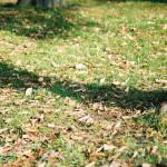 舎人公園(131207)#02