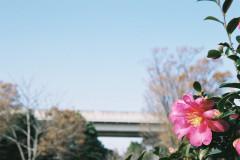 舎人公園(131207)#09