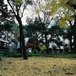 日比谷公園(131208)#12