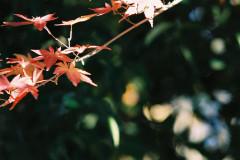 上野恩賜公園(131222)#05