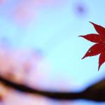 αアンバサダープログラム 「撮影ツアー in 星野リゾート 界 日光」のまとめ(3)