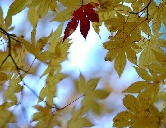 秋が深まってきてる?