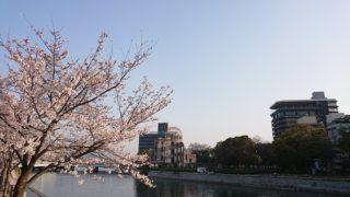 3月29日 桜は満開