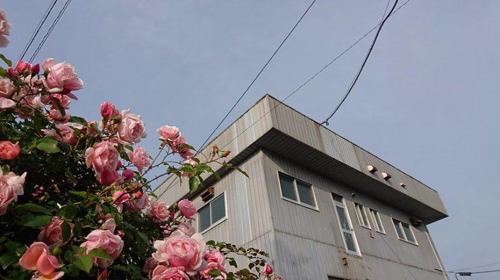 5月15日 広島で使える週末は、あと4回ぐらい