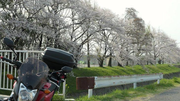 ちょっとだけ桜を探しに