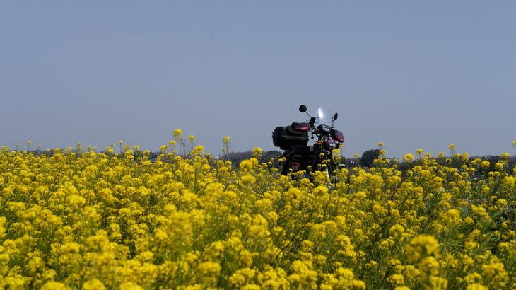 菜の花と桜を求めて、埼玉県周遊